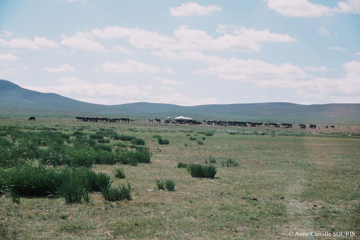 Campement de gers (yourtes) et troupeau de chevaux