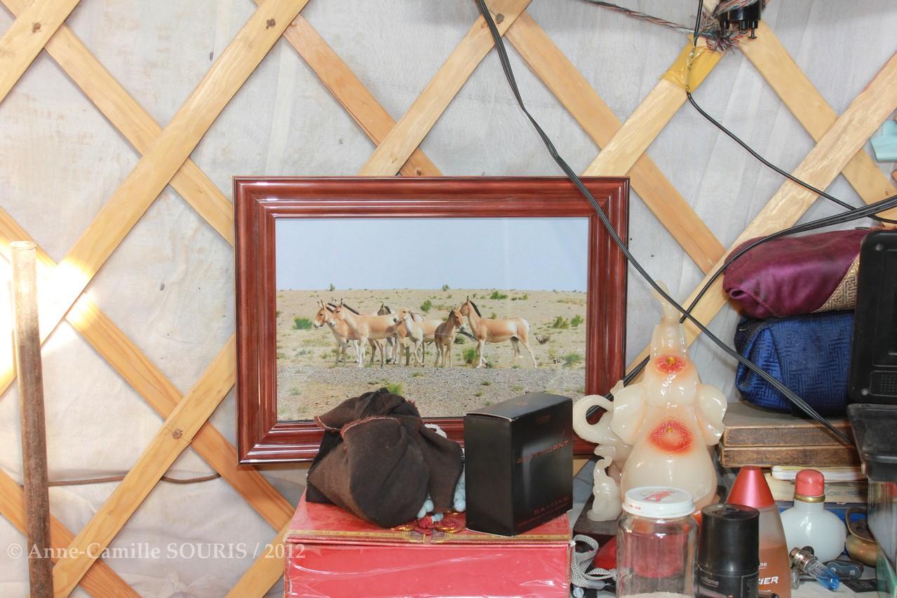 Photo d'hémiones données au moine Chaimjants et sa famille - conservationnistes citoyens de GOVIIN KHULAN