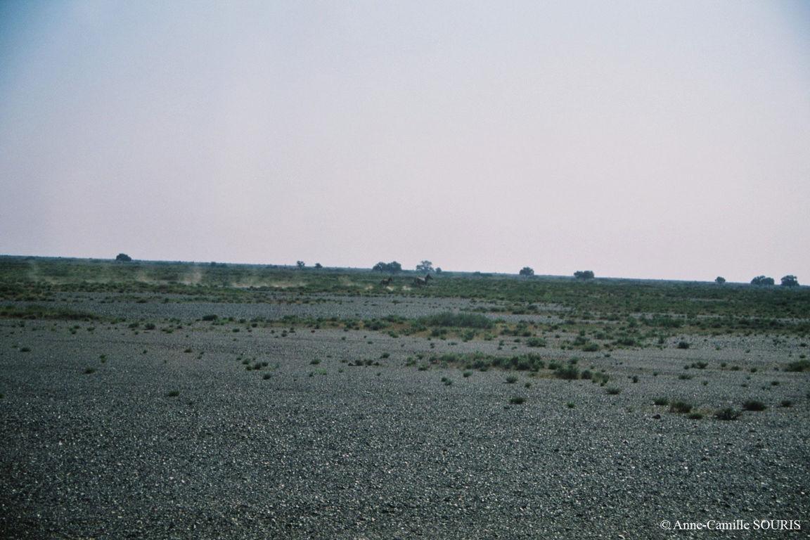 Khulans running away