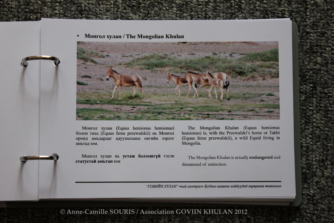 Chapitre consacré à l'hémione sauvage de Mongolie