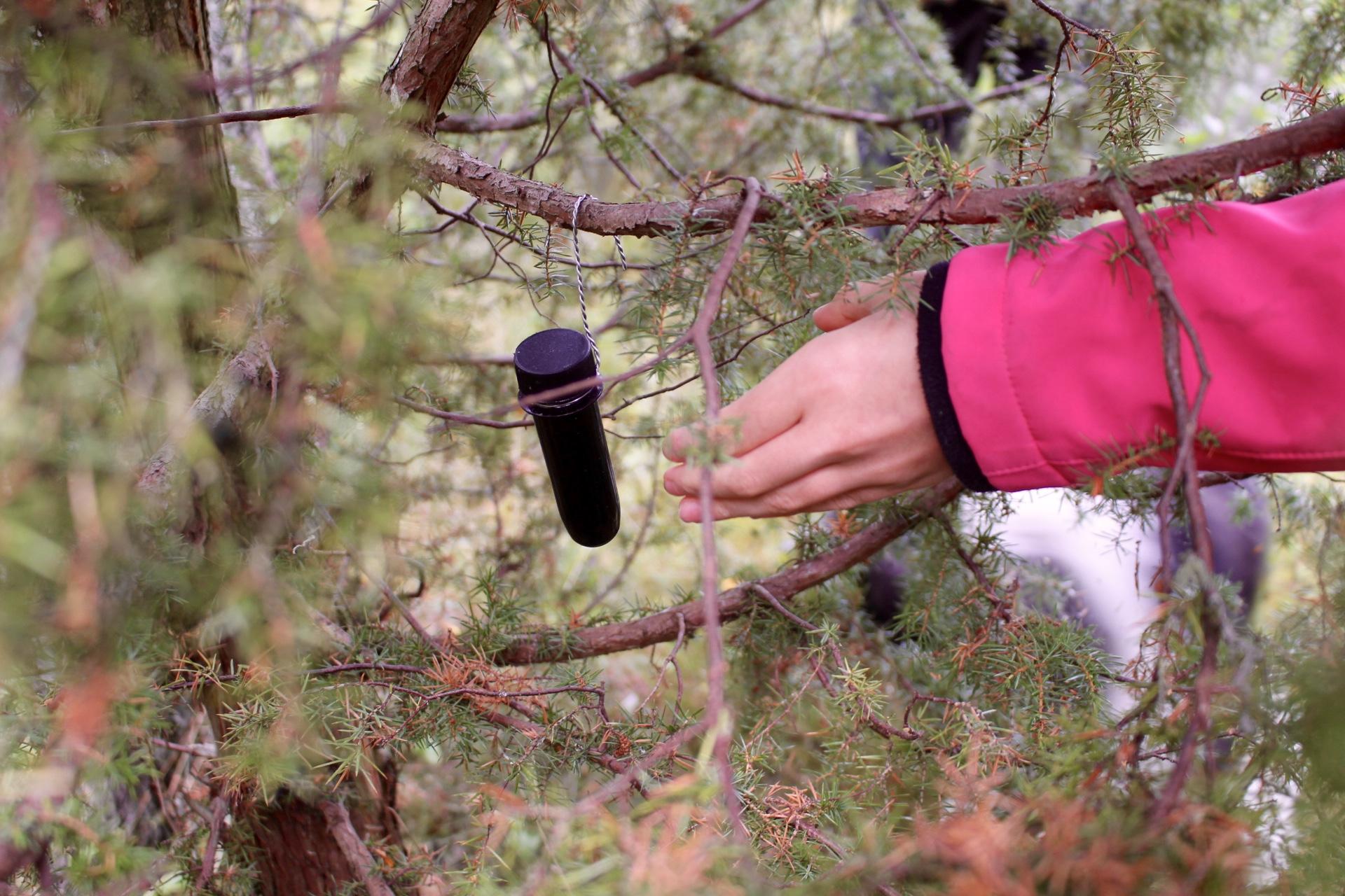 Geocache gefunden, Schatz gehoben. Unser erster Cache in Schweden