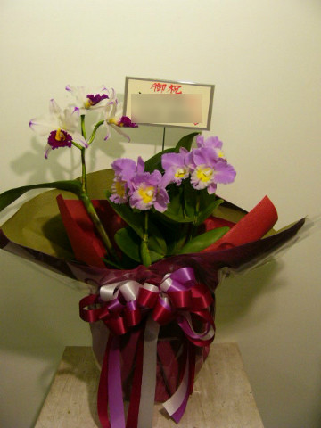 蘭鉢ミックス