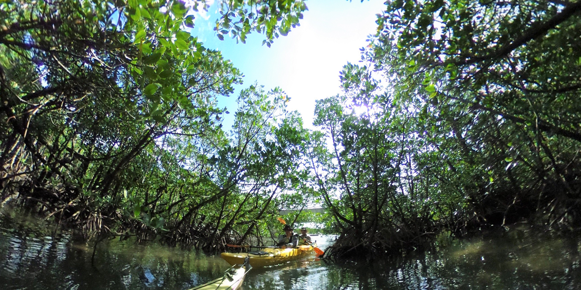 西表島/マングローブの水路