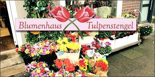 Blumenhaus Tulpenstengel in Hamburg