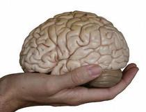 La Activación del Cerebro está en Tus Manos
