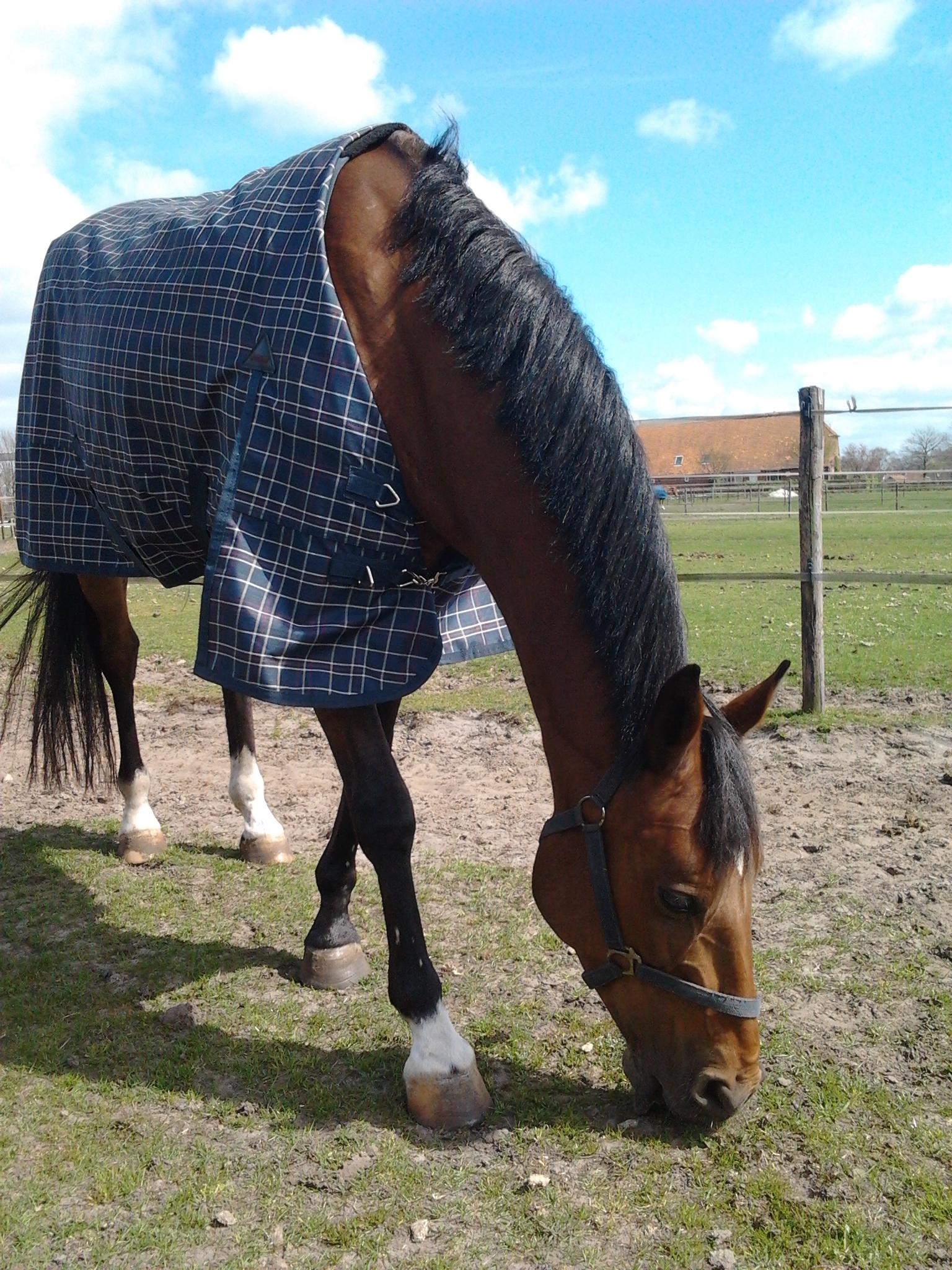 Veel paarden verblijven hier al vele jaren.  Bijvoorbeeld: Boris.