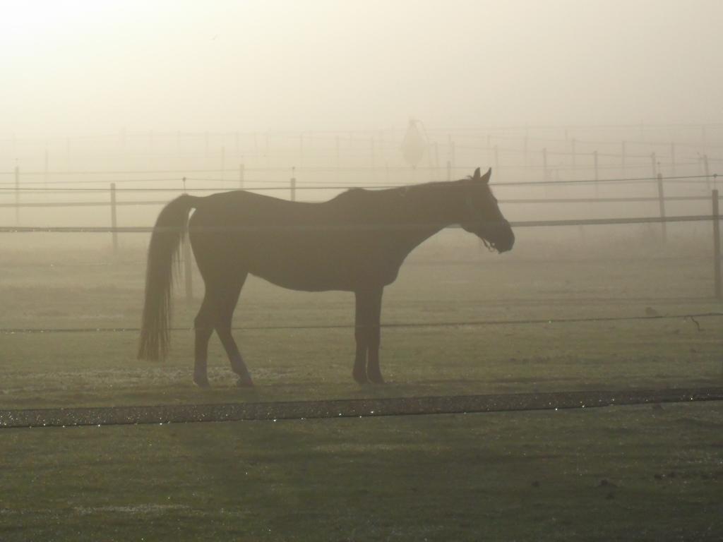 Voor dag en dauw gaan de paarden naar buiten.