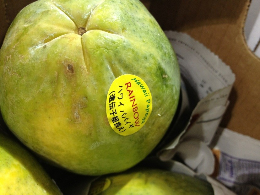Origen de la papaya maradol