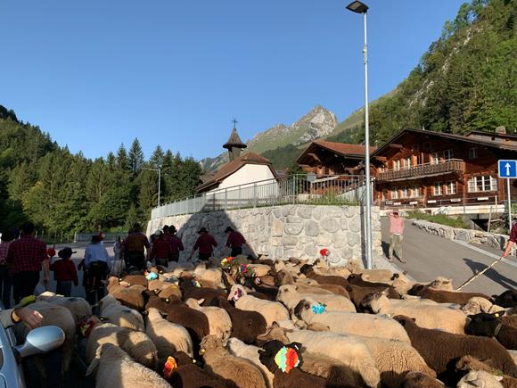 Schafscheid 2019