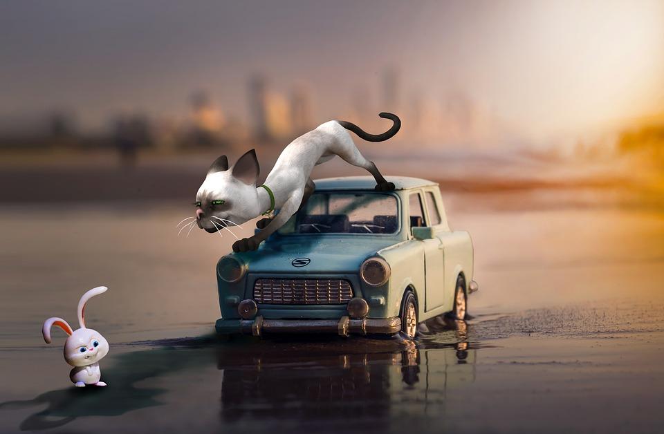 Katzen auf der Motorhaube dulden?