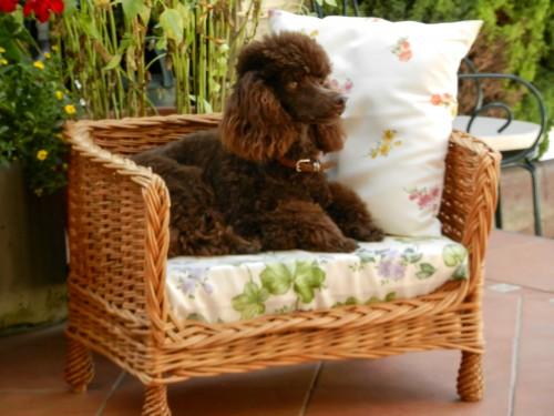 Man kann auch brav am Hundesofa sitzen!
