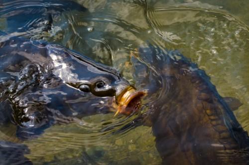 … wie mit meinen Goldfischen daheim.
