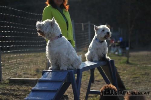 Endlich männliche Verstärkung in der Hundeschule durch Robin (im Hintergrund).