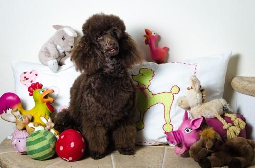 …dann verdien ich so viel Kohle und kauf ich mir endlich Spielzeug, damit ich auch eines hab´. Was red´ ich, einen ganzen Hundeartikelversand kauf ich!!!
