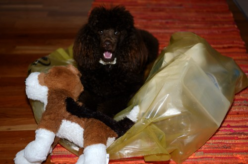 Ich könnte als Testimonial von Hundeparfüm werben …