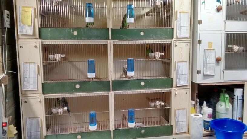 Die alten Zuchtboxen. Von 2000 bis 2020 im Dienst.