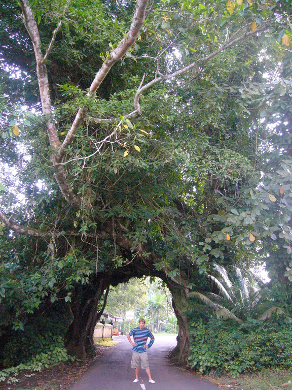 Big Tree Bali Medewi