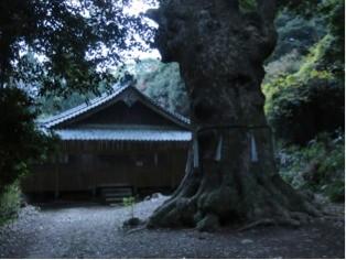 多久頭魂神社の楠