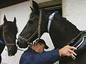 Max Eisenreich bildet Pferde aus