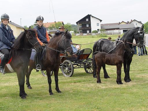 Andrea mit Niko, Michaela mit Norman ( zwei Huzulen)   Ferres v. Brunn mit seiner Mutter Heidi v. Brunn