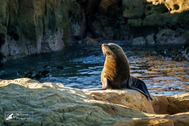 a seal posing in the sun in front of the water