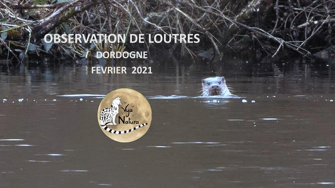 Observation de loutres en Dordogne