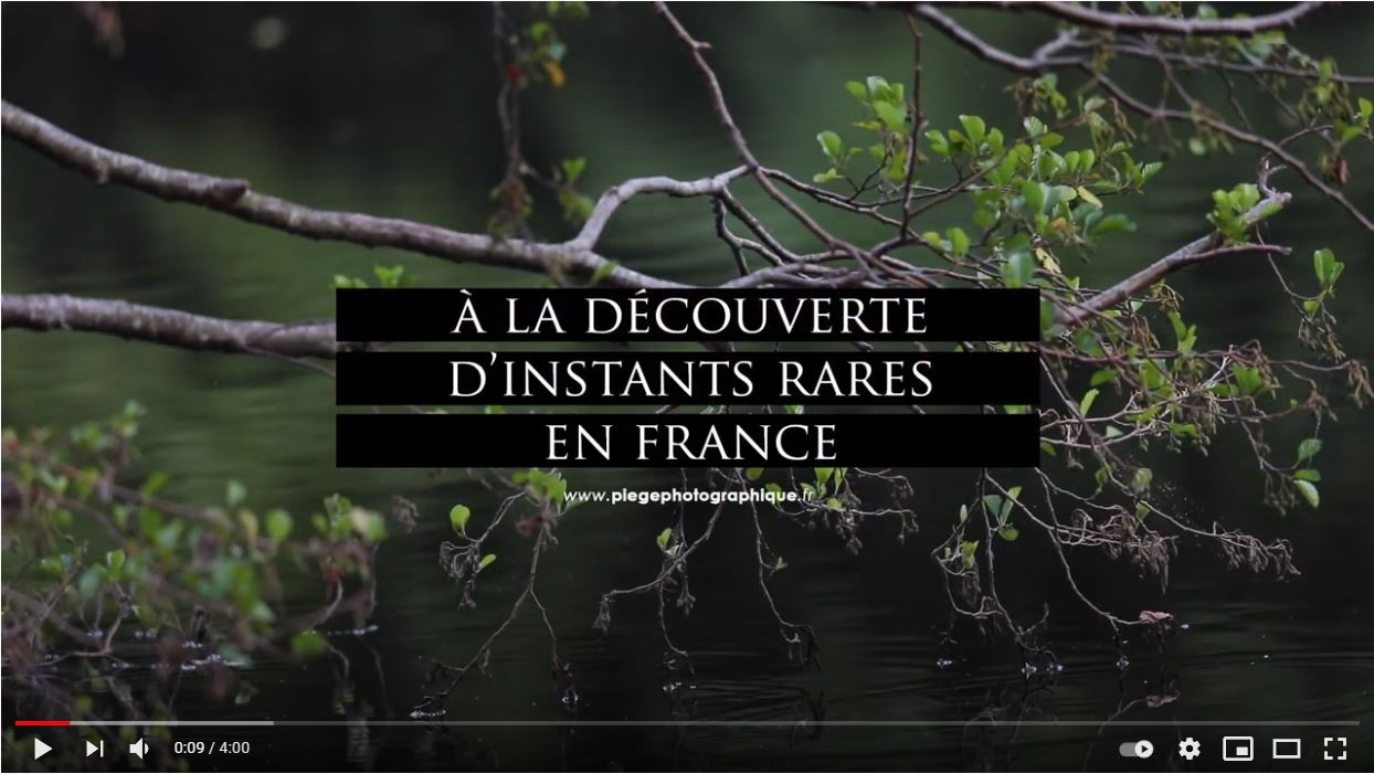 Instants rares_Naturalistes partenaires