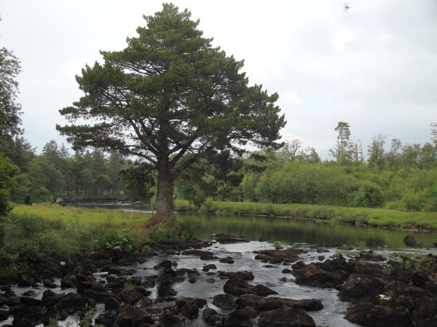 Entlang dem River Caragh