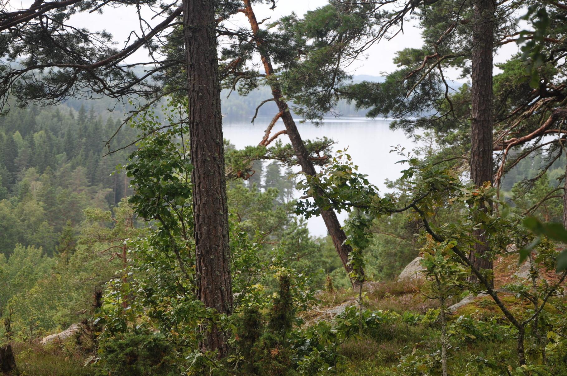 Wanderung auf dem Höglandsleden