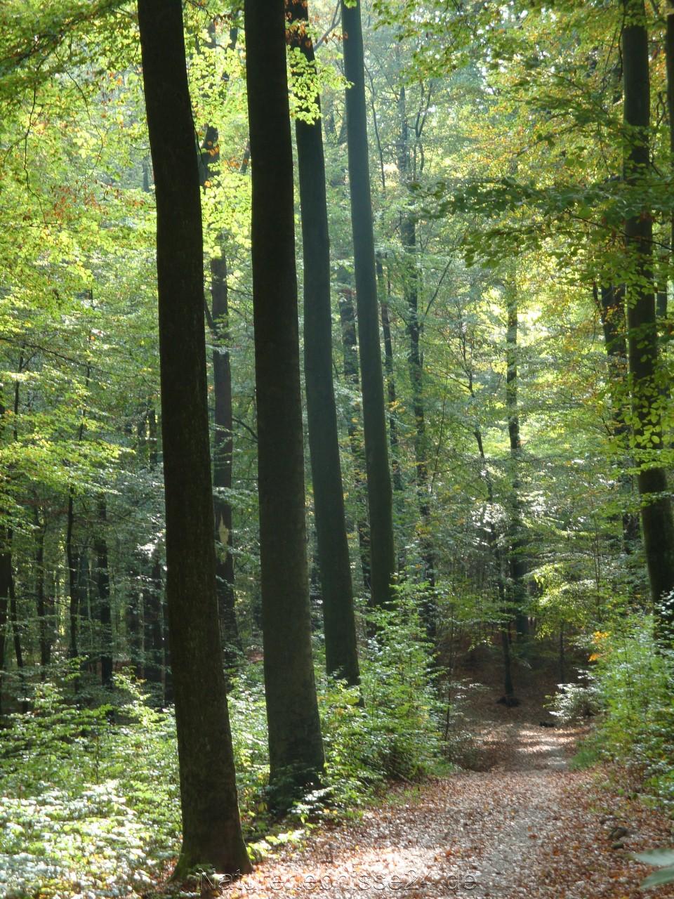 Der Wald, die schönste Ruhequelle