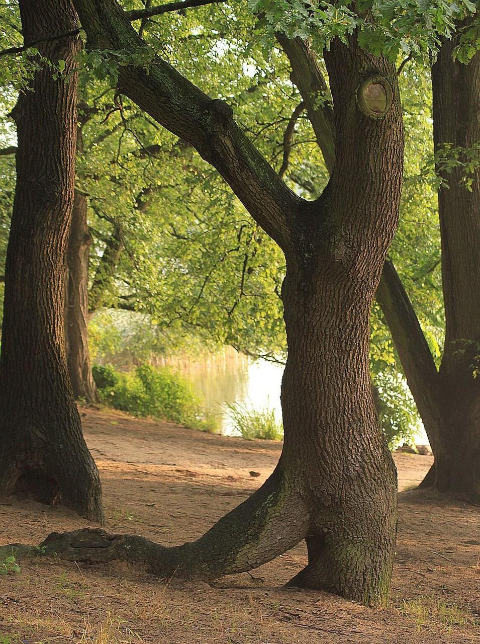 *Frau im Baum © Michael Thiel
