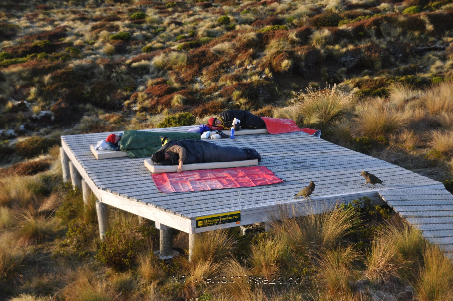 Die ganz Harten, die auf dem Hubschrauberlandeplatz schliefen