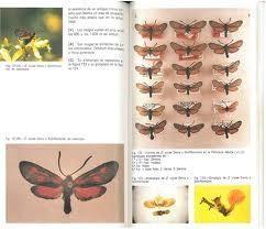 Guia de mariposas diurnas de la Peninsula Iberica - exemple de pages