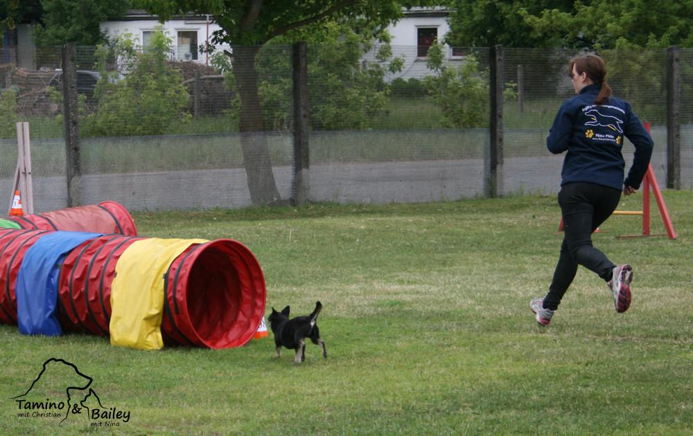 Turnier Hundeschule Zwanglos - Mai 2013