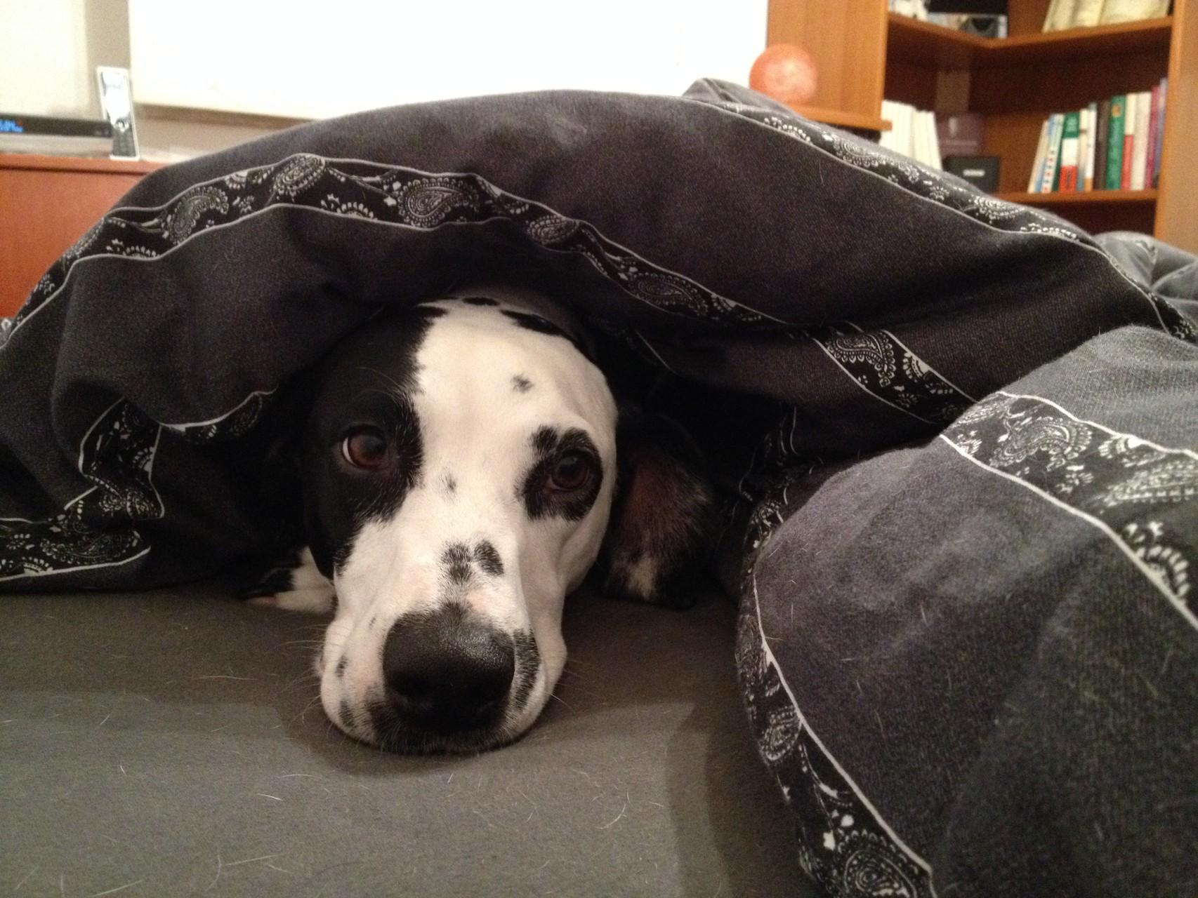 Ja, dass ist so eine neue Masche von mir. Seit neuesten schlafe ich ganz gerne unter der Decke ...