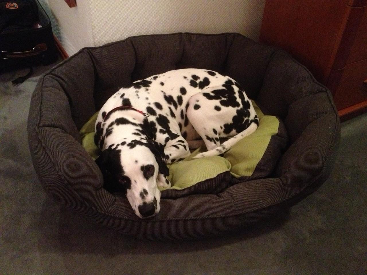Frauchen, muss ich heute Nacht tatsächlich im Körbchen schlafen???
