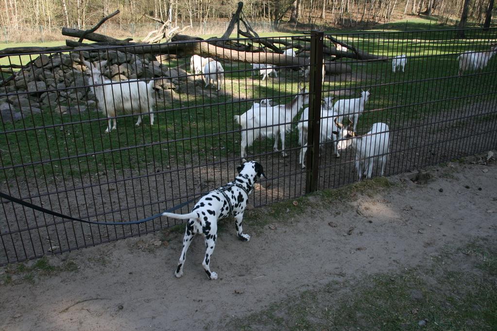 ... hinter dem Zaun interessieren!
