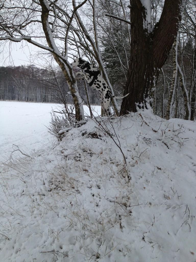 Ach und dann wachsen neuerdings Leckerlies an den Bäumen. Da ist natürlich klar, dass ich erstmal jeden Baum genauer kontrolliere!