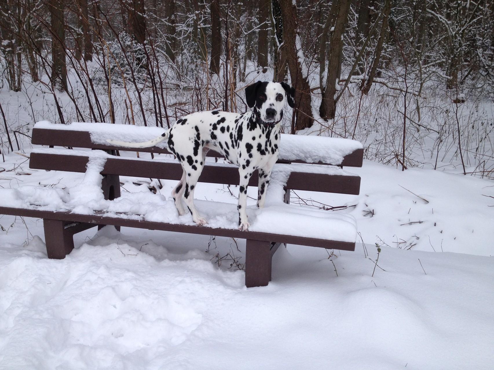 Sehr zum Leidwesen meines Frauchens hatten wir ja dann im Januar doch noch Schnee ...