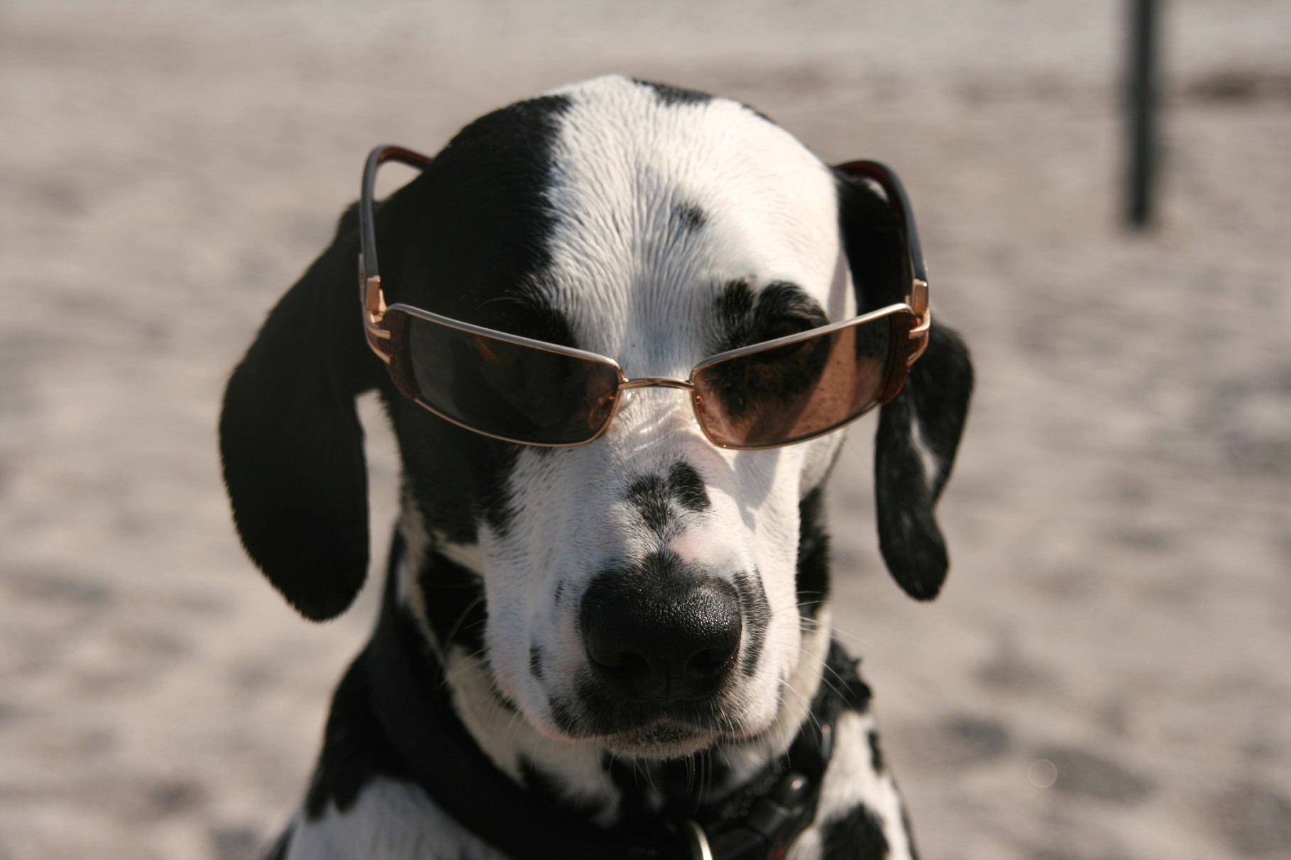 ... was meint denn ihr, welche Brille steht mir besser???