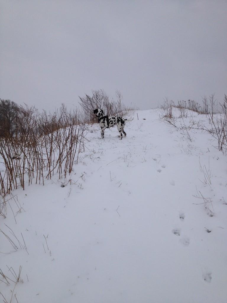 Dann habe ich halt noch den Wistedter Berg erklommen!