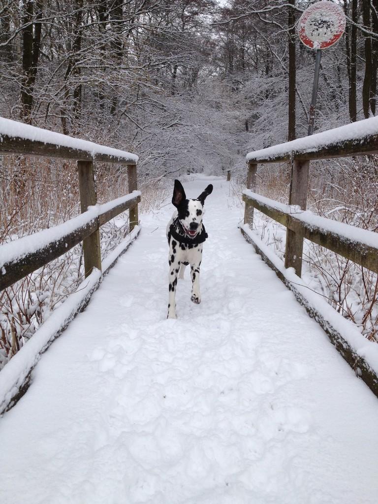 ... und heute nun wieder ordentlich Schnee!