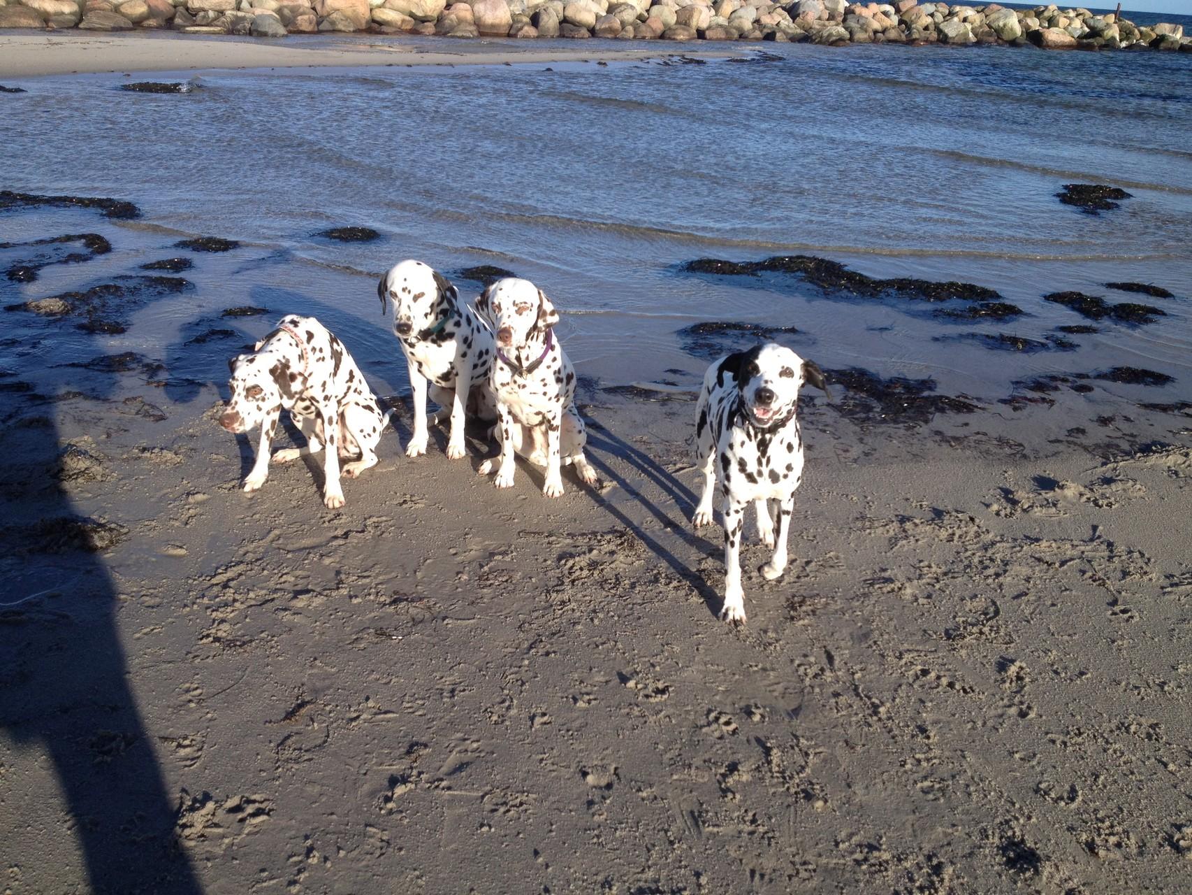 ... hier mal von links nach rechts: Kiwi vom Traveufer, Lennox und Sunny vom Hause Piccolino und meine Wenigkeit.
