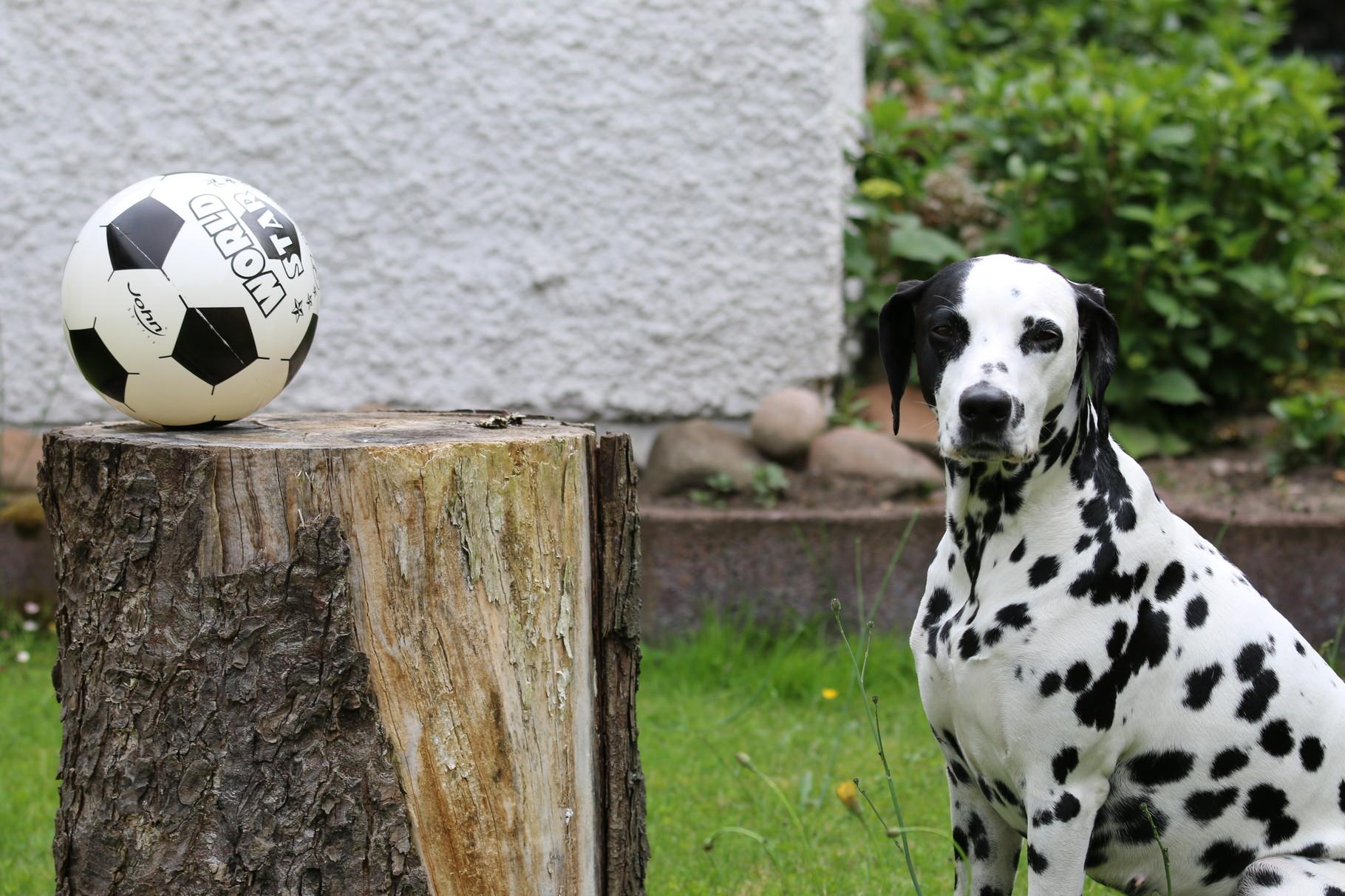 OK, ich erlöse Euch ... es ist ein Ball!