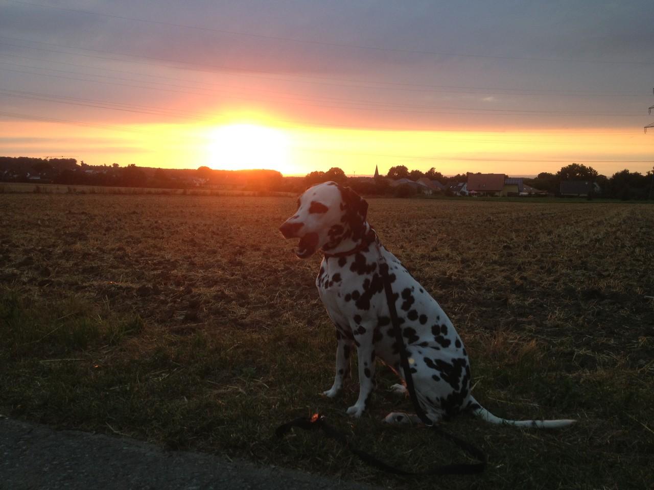 Sonnenuntergang in Büren ... boah, bin ich müde!