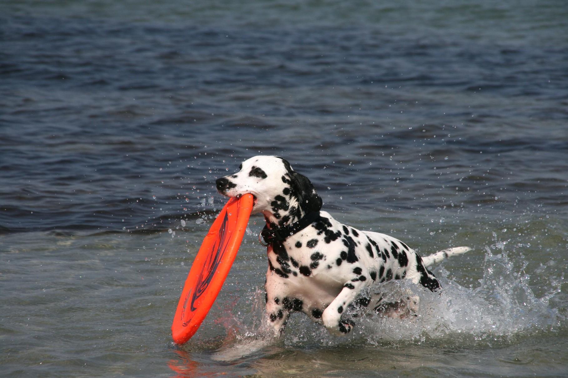 ... um mein Spielzeug aus dem Wasser zu fischen.