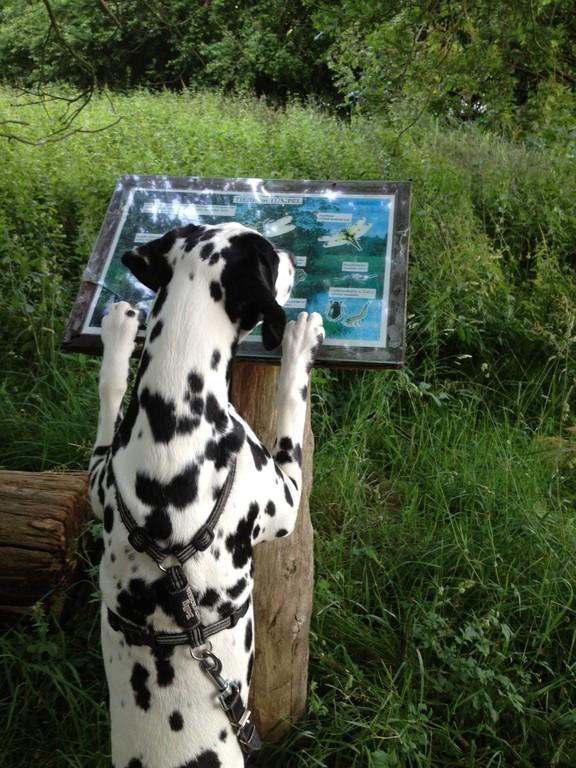 Das ist ja interessant - hier kann man sich informieren, welche Tiere im Tümpel leben!
