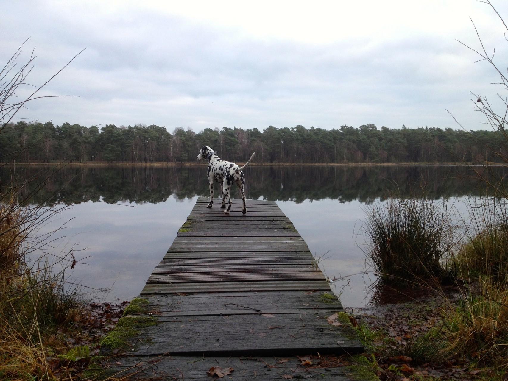 ... habe ich mich doch entschlossen, lieber die Ruhe am See zu genießen!