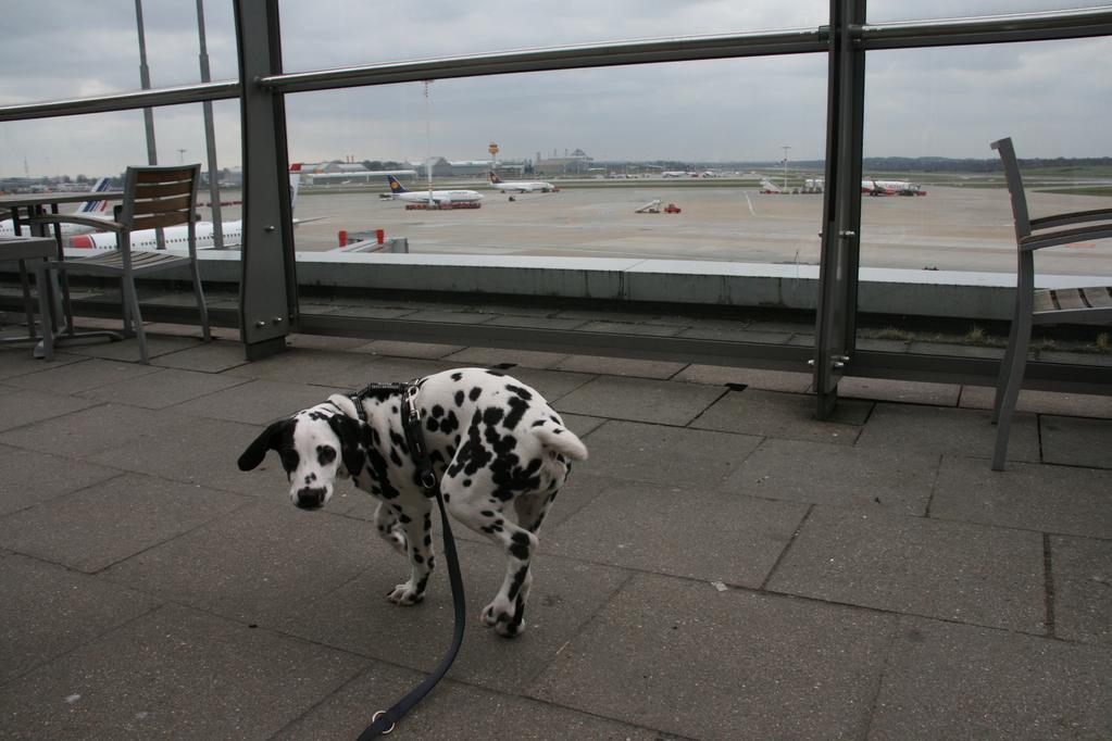 Hier bin ich am Hamburger Flughafen.