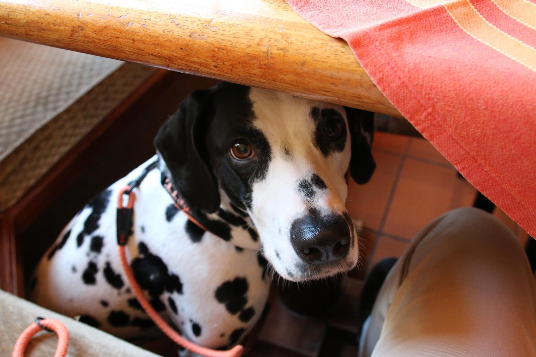 Ist das nicht gemein ... während auf dem Tisch die leckersten Sachen stehen, soll ich hier unten brav sein ...